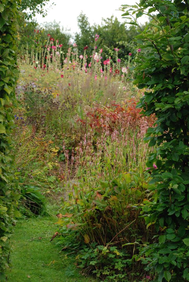 Montpelier Cottage garden Noel Kingsbury Lisa Cox