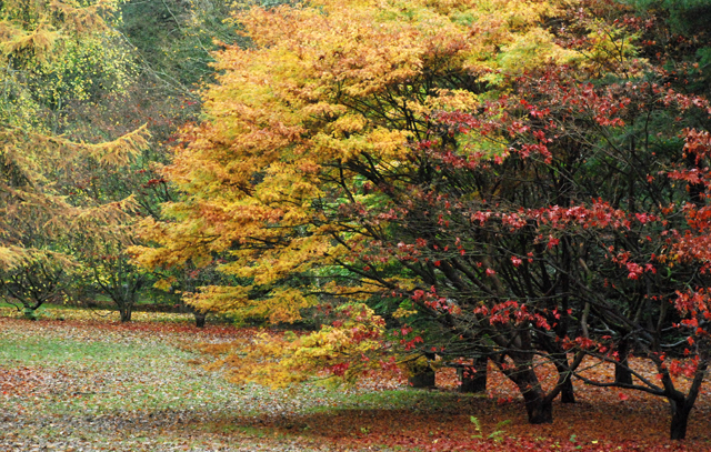 Autumn colour at Westonbirt Arboretum Lisa Cox Designs