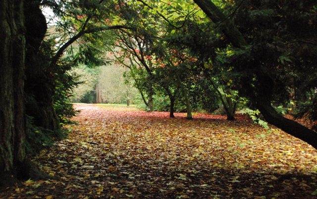 Fallen autumn leaves at Westonbirt Arboretum Lisa Cox