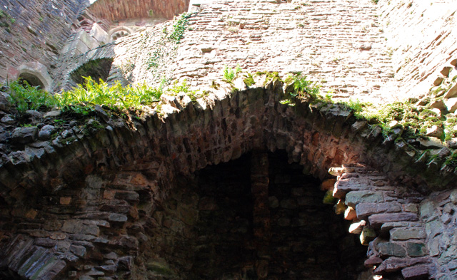 Ferns on the roof Raglan Castle Lisa Cox