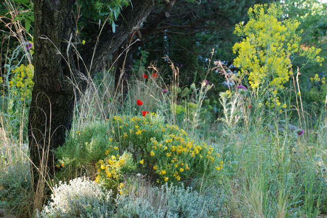 James Basson's wild planting Chelsea 2016 Lisa Cox