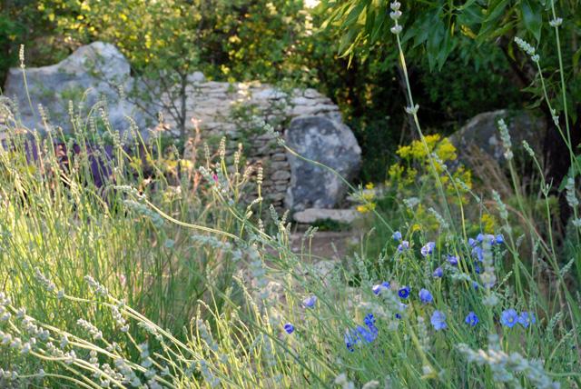 Lavender in L'Occitane Garden RHS Chelsea 2016