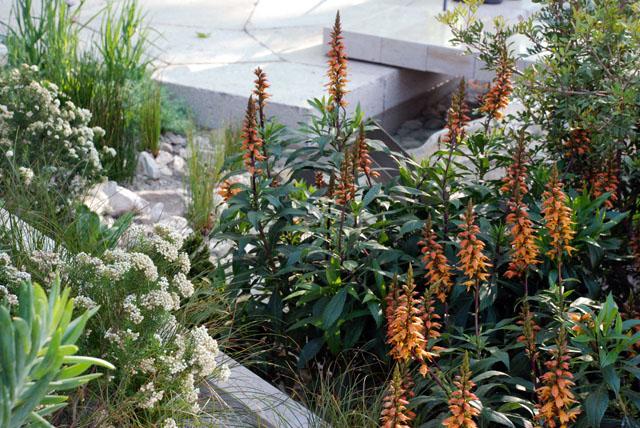 Planting in The Telegraph Garden RHS Chelsea 2016 Lisa Cox