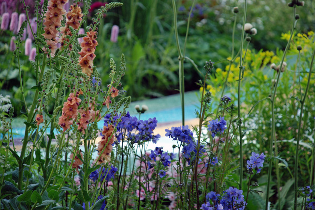 Rosy Hardy's planting Brewin Dolphin RHS Chelsea 2016 Lisa Cox