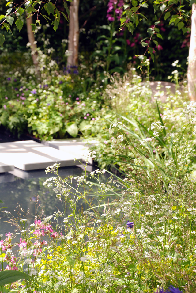 Wild planting in Hartley Botanic Garden RHS Chelsea 2016