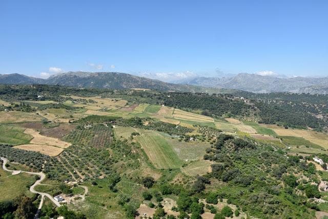 View from Ronda Lisa Cox Garden Designs
