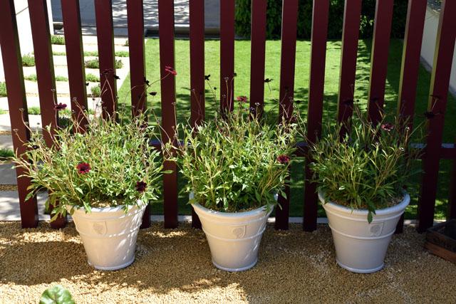 Post of Cosmos Squires garden RHS Hampton 2016 Lisa Cox