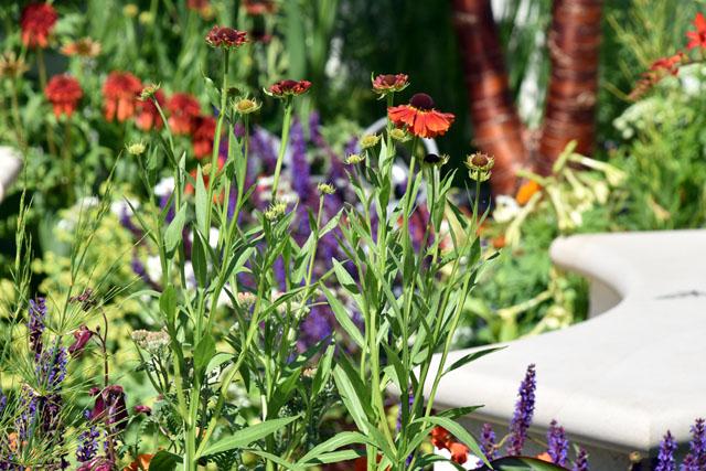 RHS Hampton 2016 Vibrant planting New Horizons City Garden Lisa Cox