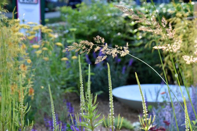 Summer Garden The Retreat Lisa Cox RHS Hampton 2016
