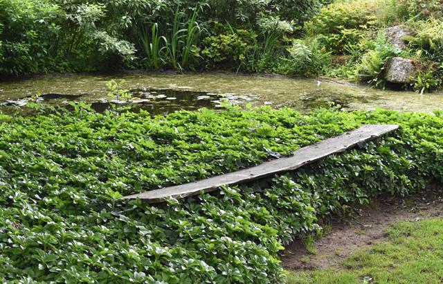 Floating bench at Dewstow Lisa Cox Garden Designs