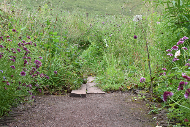 Pathway through wild meadow Allt-y-bela Lisa Cox