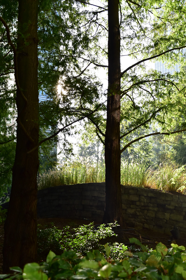 jubilee-park-canary-wharf-lisa-cox-garden-designs