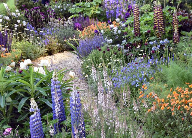 Rhs Chelsea Flower Show 2017 Lisa Cox Garden Designs Blog