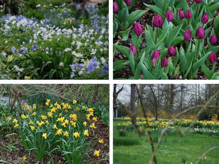 5 great gardens for spring bulbs lisa cox garden designs