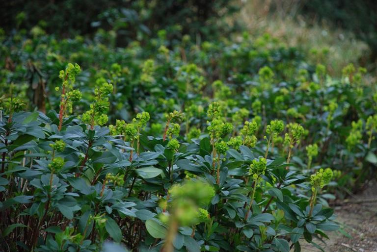 Perennials For Deep Shade