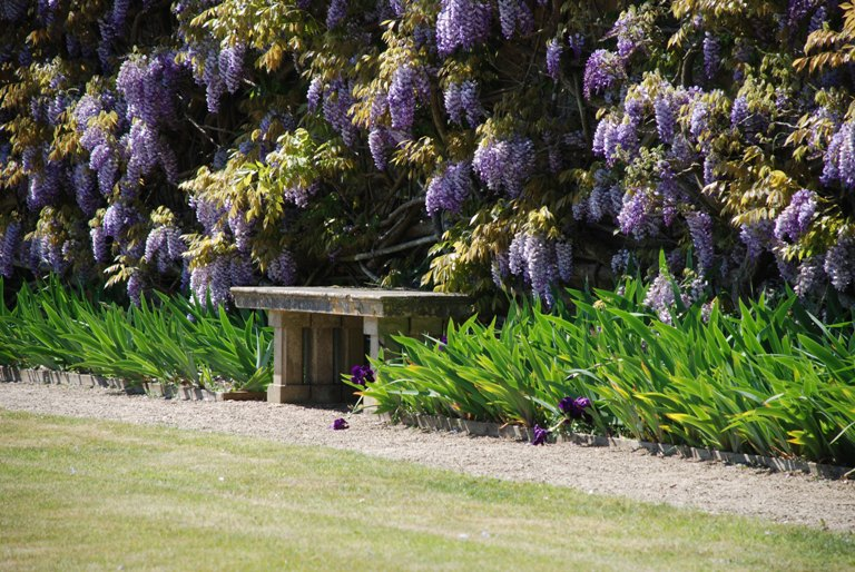 Wisteria at Loseley Park