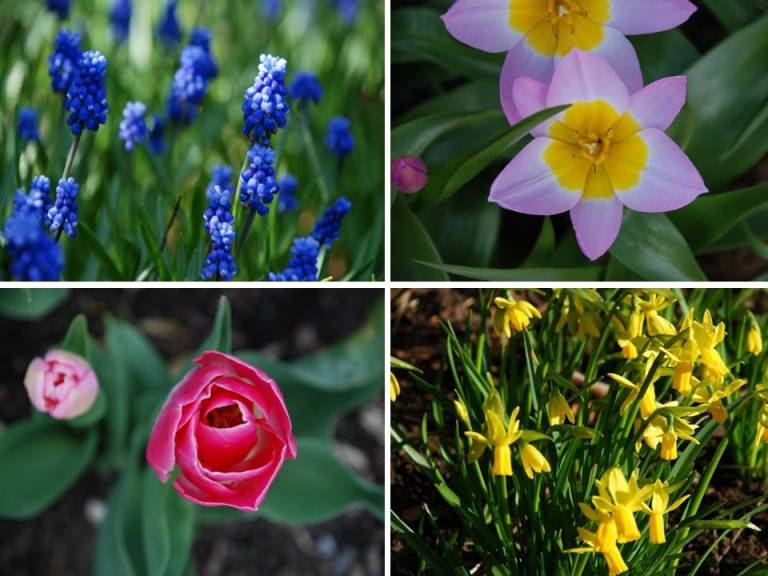 Garden flowers now is the time to plant your spring flowering bulbs with mightylinksfo