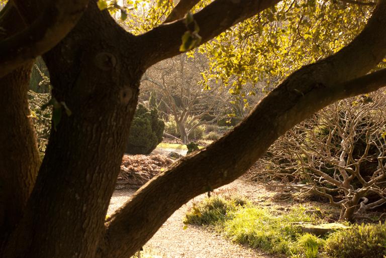 Conifer garden at Sir Harold Hillier Romsey