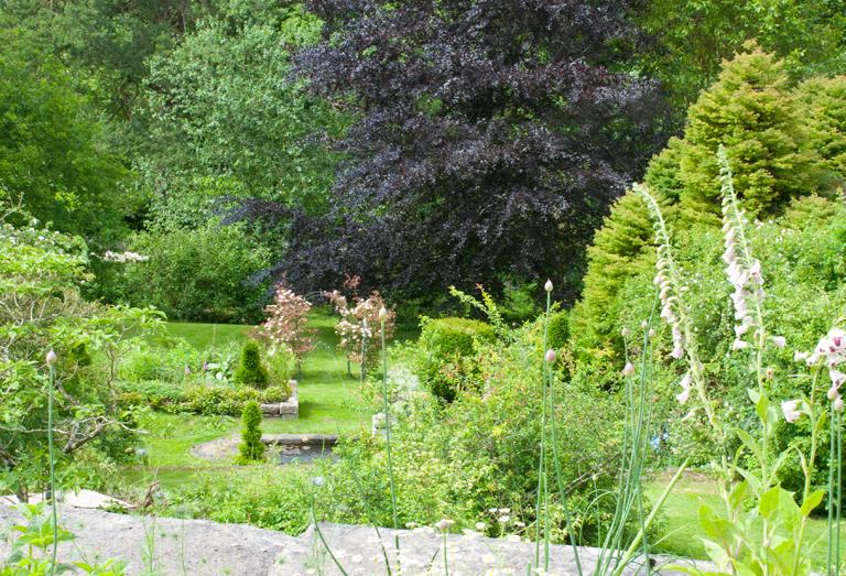 Magnolia grandiflora lisa cox garden designs blog for Grand designs back garden