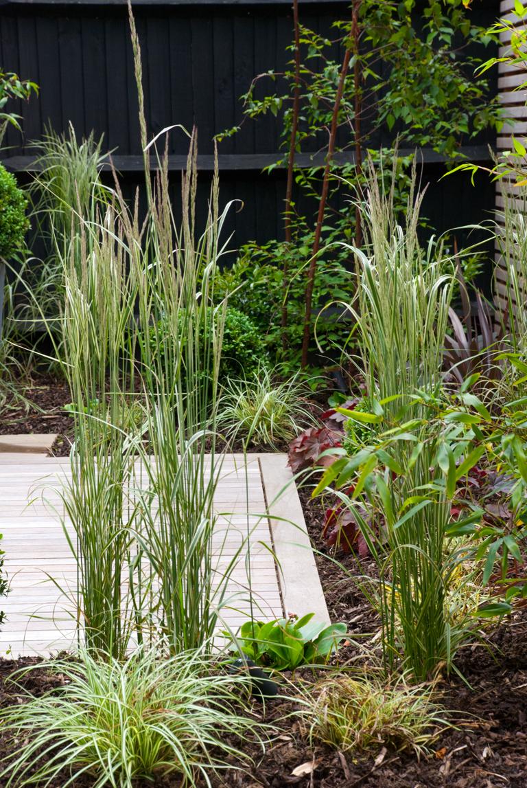 winter garden with evergreen structure lisa cox garden designs blog