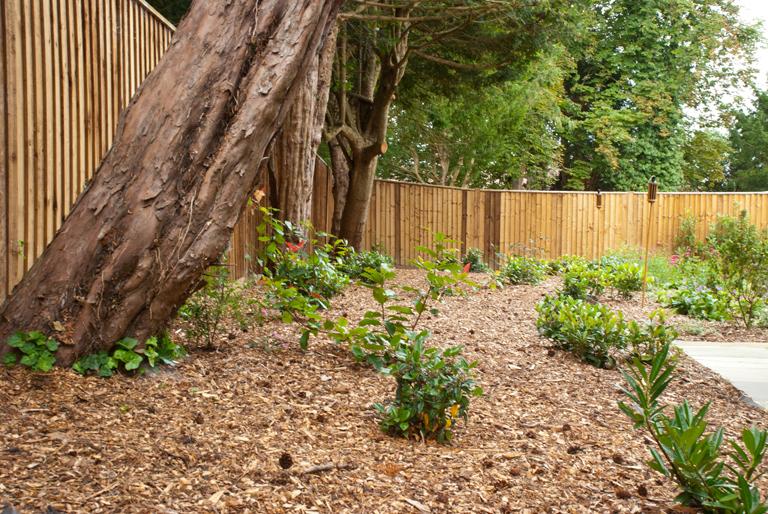 Planting under yew trees lisa cox garden designs blog for Garden design under gum trees