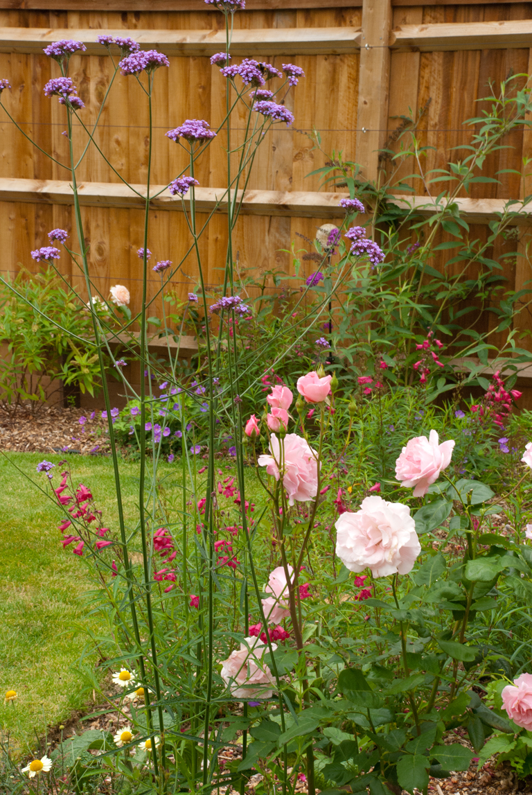 Roses and perennials planting lisa cox garden designs blog for Garden design ideas blog