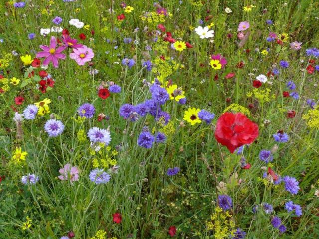 Create a flower meadow with nova flore seed mixes lisa for My gardener landscaping