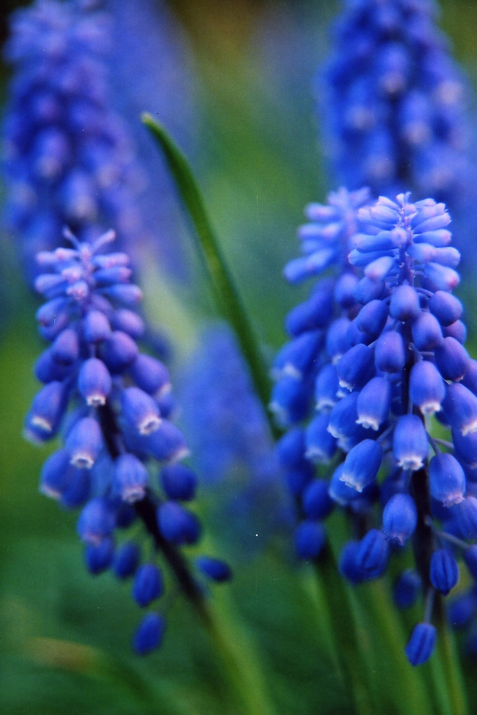 Bulbs For Spring Colour Lisa Cox Garden Designs Blog
