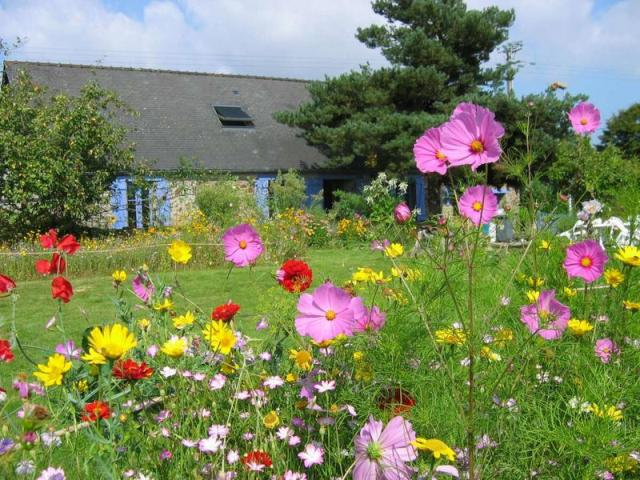 Create a flower meadow with nova flore seed mixes lisa for Design my landscape