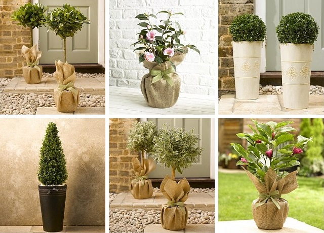 Marks & Spencer mail order outdoor plants