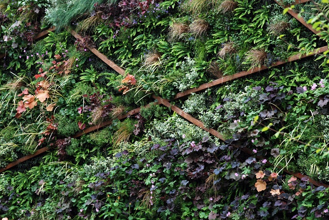 Living wall on Stoke on Trent garden RHS Chelsea 2013