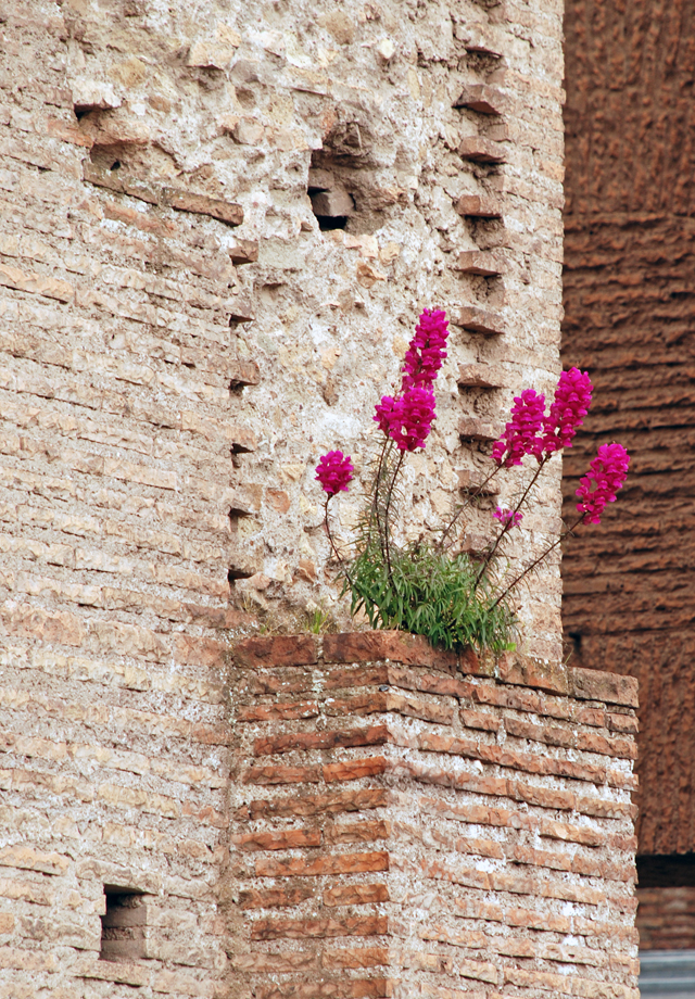 The Roman Forum brick walls by Lisa Cox
