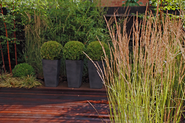 Calamagrostis x acutiflora 39 karl foerster 39 lisa cox for Contemporary grasses
