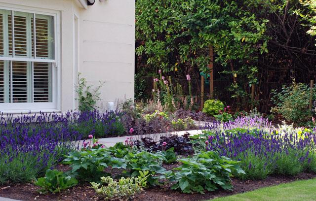 Front garden planting Oxshott Lisa Cox Designs