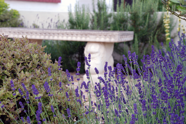 Lavender & stone bench in Leatherhead Garden Lisa Cox Garden Designs