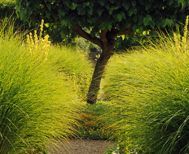 Miscanthus zebrinus in Flower Garden at Loseley Lisa Cox Designs