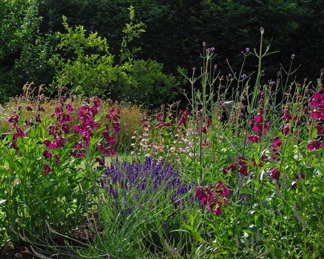 Planting Oxshott Lisa Cox Garden Designs