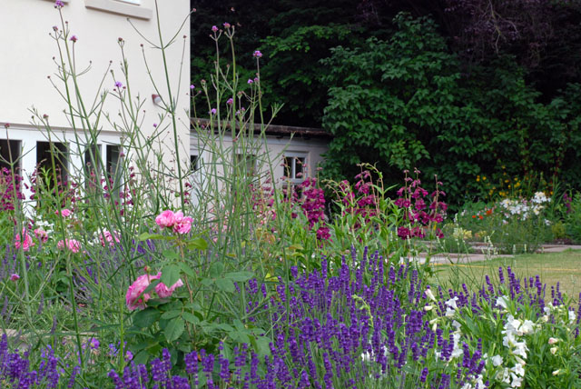 Planting near the house - back garden Oxshott Lisa Cox Designs