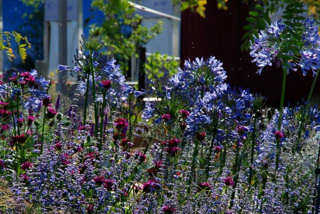 The Ecover Garden planting Hampton Court Flower Show 2013 Lisa Cox