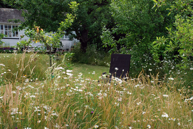 Wildflower meadow in Oxshott Garden Lisa Cox Designs