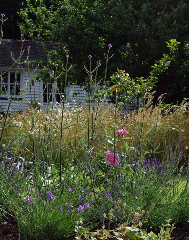 oxshott garden design Lisa Cox back planting
