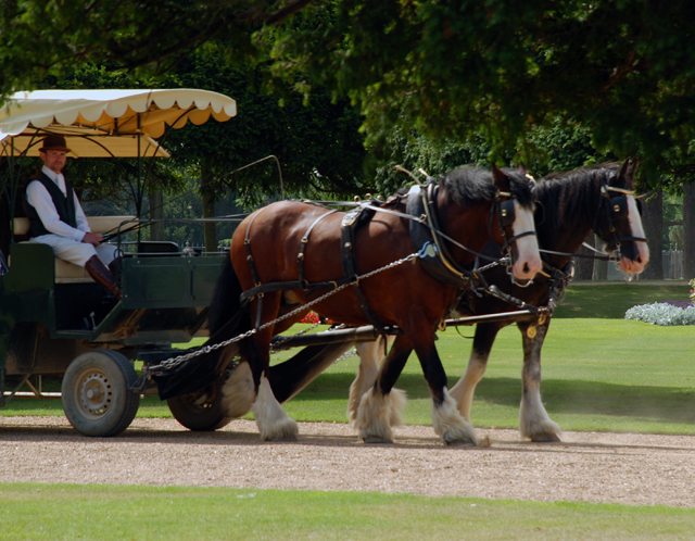 Horse drawn carriage at Hampton Court Palace Lisa Cox