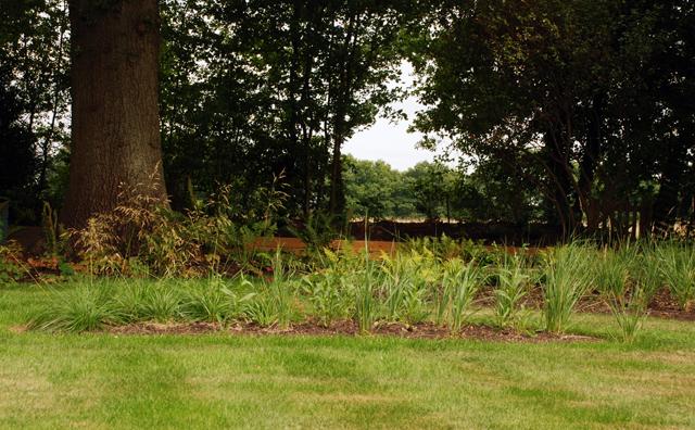 Planting beneath oak tree East Horsley Lisa Cox Garden Designs