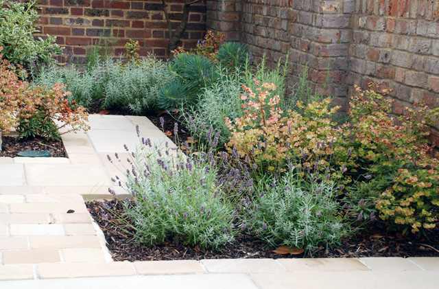 Planting in front garden Wandsworth Lisa Cox Designs