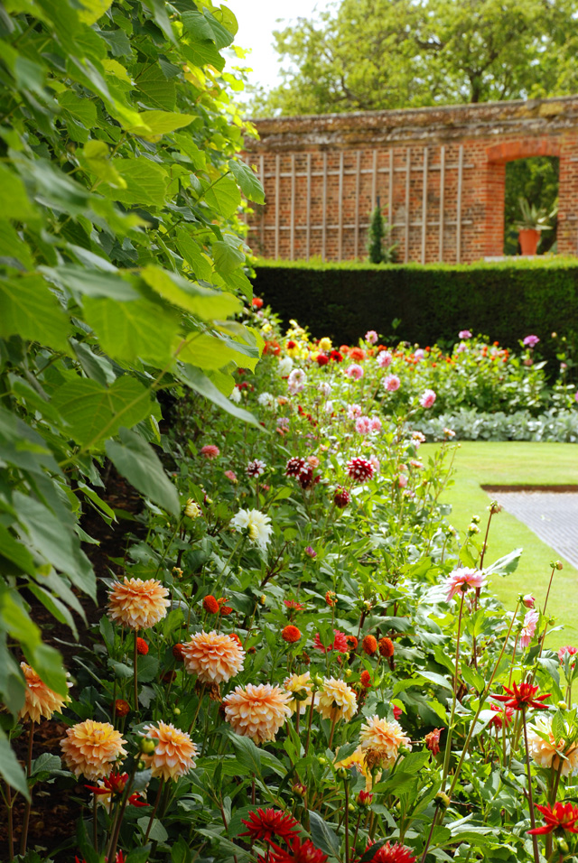 Dahlias at Hampton Court Palace Lisa Cox Garden Designs