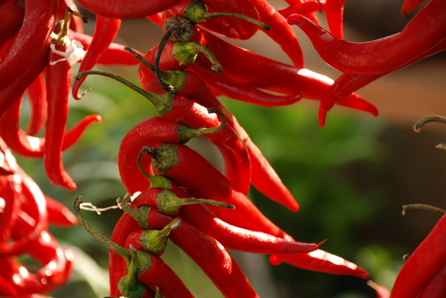 Red chillies on Pennard Plants stand at RHS Wisley Flower Show Lisa Cox