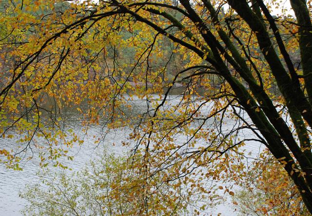 Lac de Guerledan in Autumn Lisa Cox Garden Designs