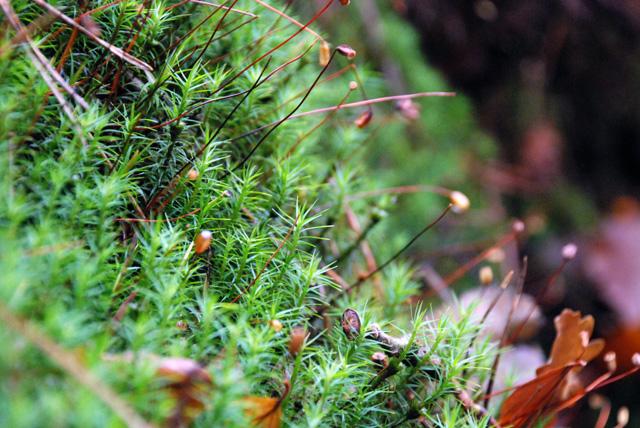 Woodland moss Lisa Cox Garden Designs