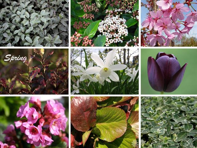 Planting Design Sutton Spring
