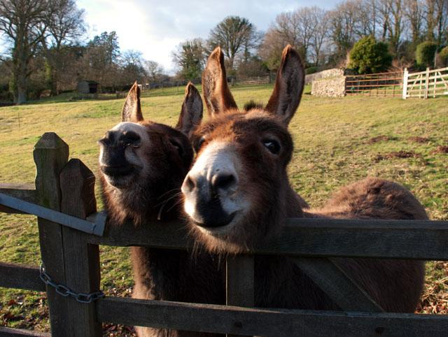 Donkeys in the Wye Valley Lisa Cox Garden Designs